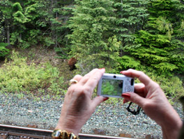 Photographing the bear from the Rocky Mountaineer train