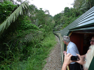 The E&O in thick jungle...