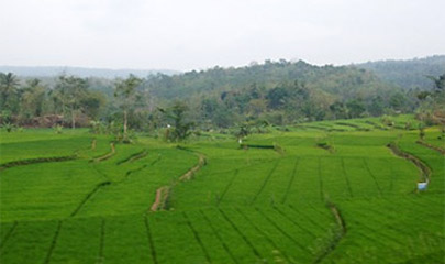 Scenery from the train in Indonesia