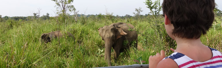 Elephants at Habarana Huluru Eco Park