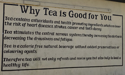 Why Tea Is Good For You