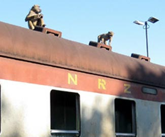 Monkeys on the roof of Victoria Falls to Bulawayo train