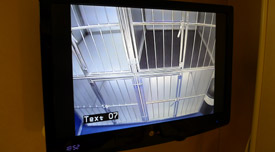 Channel 6 on your cabin TV views the kennels