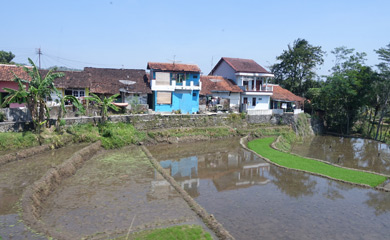Village & rice paddies