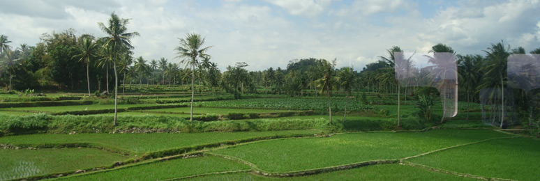 Great scenery from the train in eastern Java